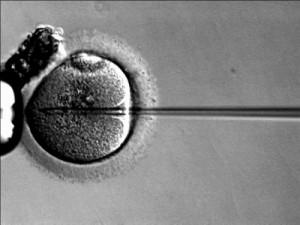 IVF, Public Domain Photo